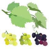 Uvas rojo, verde y blanco con las hojas de la uva Foto de archivo libre de regalías