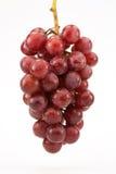Uvas Seedless vermelhas na videira Imagem de Stock