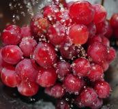 Uvas sin semillas rojas foto de archivo