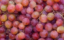 Uvas sin semillas rojas Fotografía de archivo libre de regalías