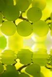Uvas sobre el agua Imagen de archivo libre de regalías