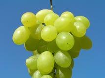 Uvas verdes Foto de Stock Royalty Free