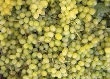 Uvas verdes Imagem de Stock Royalty Free