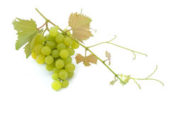Uvas verdes Fotos de Stock Royalty Free