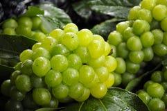 Uvas verdes Fotos de archivo