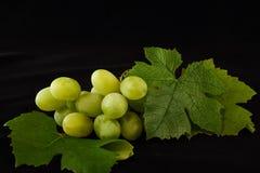 Uvas verdes com folhas Fotos de Stock