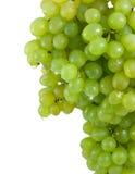 Uvas verdes do conjunto com gotas da água. Fotos de Stock