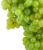 Uvas verdes do conjunto com gotas da água. Fotos de Stock Royalty Free