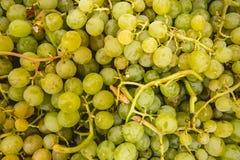 Uvas verdes do pomar Valencian fotos de stock