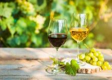 Uvas verdes e dois vidros do branco e do vinho tinto no vi Imagem de Stock Royalty Free