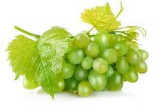 Uvas verdes frescas com fruto da colheita da folha Imagem de Stock