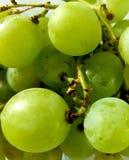 uvas verdes grandes suculentas e doces foto de stock royalty free