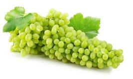 Uvas verdes isoladas no fundo branco Foto de Stock Royalty Free