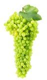 Uvas verdes isoladas no fundo branco Fotos de Stock Royalty Free