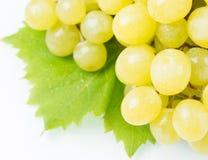 Uvas verdes jugosas Foto de archivo libre de regalías