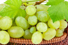 Uvas verdes no close up Imagem de Stock Royalty Free