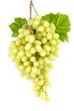 Uvas verdes sin semillas dulces en blanco fotografía de archivo