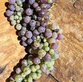 Uvas verdes y púrpuras Imágenes de archivo libres de regalías