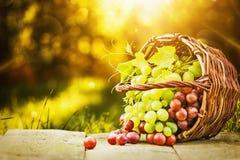 Uvas verdes y rojas Foto de archivo libre de regalías