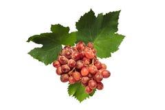 Uvas vermelhas Imagens de Stock Royalty Free