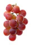 uvas vermelhas Imagens de Stock