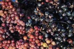 Uvas vermelhas e pretas imagens de stock
