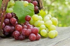Uvas vermelhas e verdes frescas em uma tabela de madeira rústica Foto de Stock