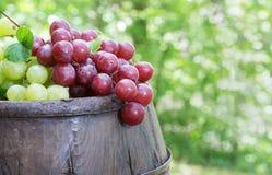 Uvas vermelhas e verdes sobre um tambor de vinho velho Fotografia de Stock Royalty Free