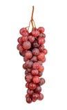 Uvas vermelhas isoladas no branco Fotografia de Stock Royalty Free
