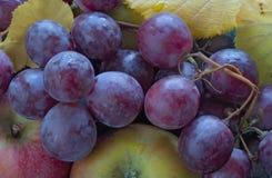 Uvas vermelhas, maçãs e leafes Imagens de Stock