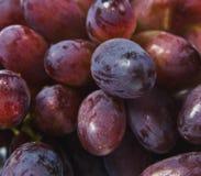 Uvas vermelhas saborosos doces, fonte de antioxidantes Fotografia de Stock Royalty Free