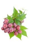 Uvas vermelhas suculentas molhadas Fotografia de Stock