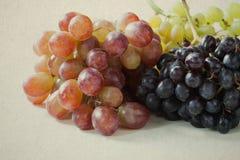 Uvas (violetas) del rojo, verdes y púrpuras Foto de archivo libre de regalías