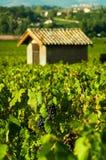 Uvas y choza, Beaujolais, Francia Imagenes de archivo