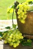 Uvas y hojas verdes Fotografía de archivo libre de regalías