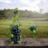 Uvas y un vidrio de vino del viñedo en un viejo fondo de madera Fotografía de archivo