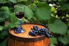 Uvas y un vidrio de vino en barril del roble en viñedo Foto de archivo libre de regalías