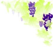 Uvas y vides ilustración del vector