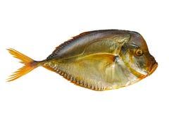Uwędzona ryba na białym odosobnionym tle Obraz Royalty Free
