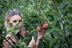 Uw appelen stock foto's