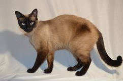 Uw Cat Might bedorven is stock fotografie