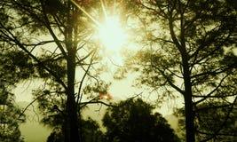 Uw eigen zonneschijn stock fotografie