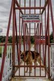 Uwaga strażowy pies Zdjęcia Royalty Free