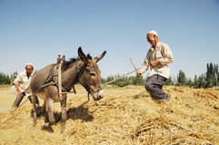 Uygur peasants Stock Photo