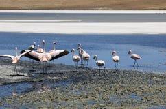 uyuni de flamingos salar στοκ φωτογραφίες