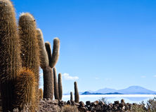 Uyuni Desert in Bolivia Royalty Free Stock Photography