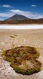 uyuni salar мха de пустыни Стоковое Фото