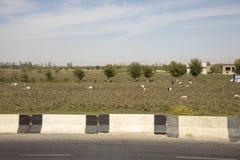 Uzbek cotton campaign workers stock photo
