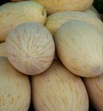 Uzbek melons on the market Royalty Free Stock Photo