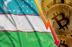 Uzbekistan flag and cryptocurrency falling trend with many golden bitcoins. Concept of reduction Bitcoin in price or bad conversion in cryptocurrency mining royalty free illustration